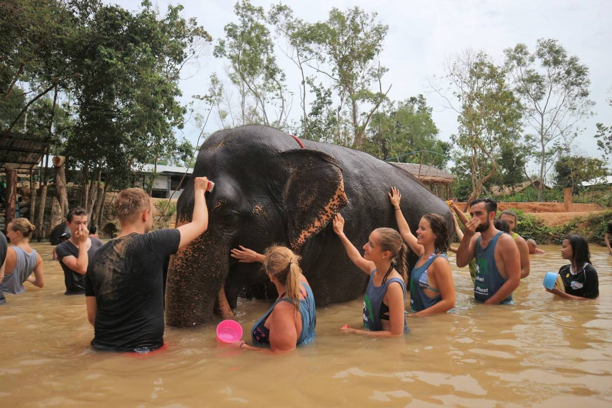 Phuket Volunteer Elephant Care Training Program